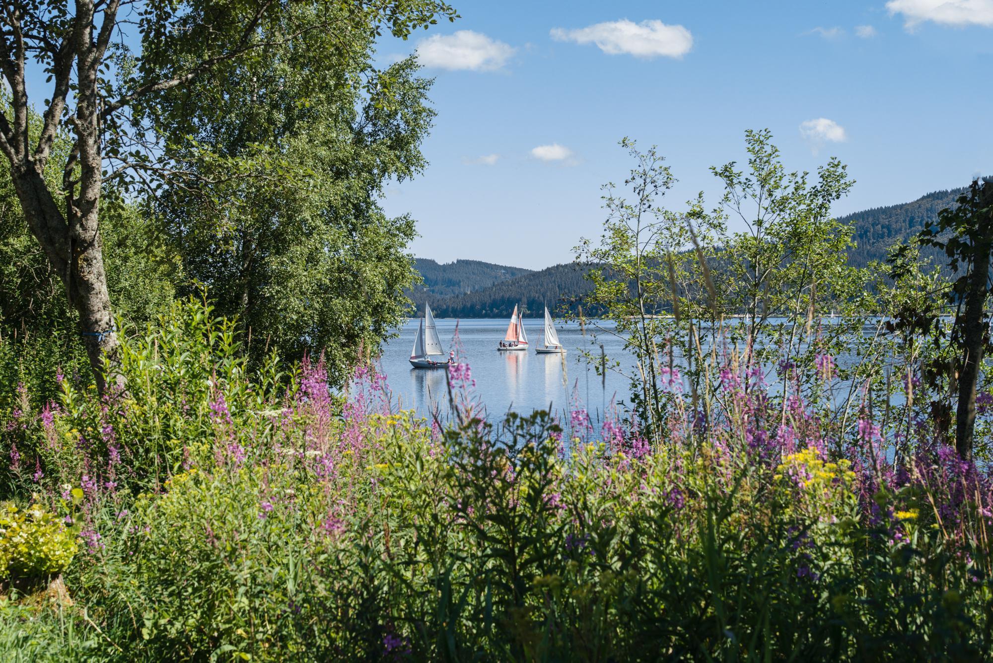 Blick durch Wiese auf Schluchsee mit Booten